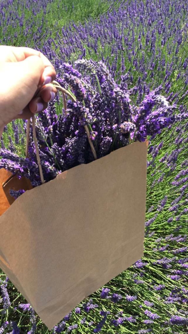 pick your own lavender london
