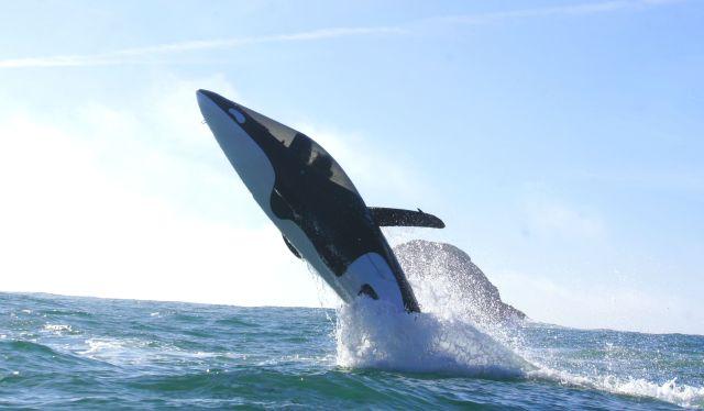 seabreacher-whale-london