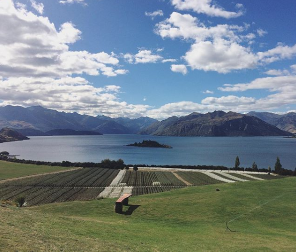 rippon-vineyard-wanaka