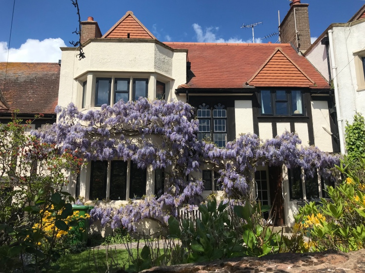 wisteria-covering-house-english-cotage