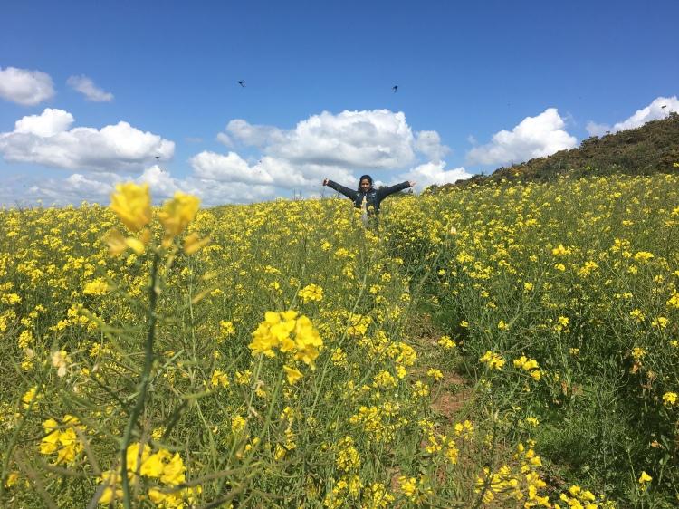 rapeseed-field-flower-yellow